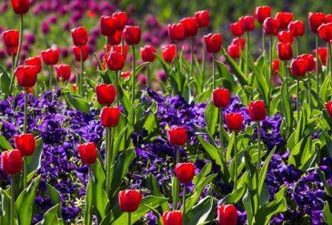 A nagy tavaszi virág Quiz!
